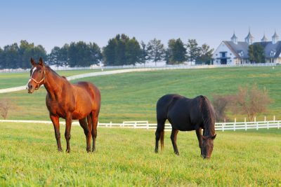 Top Equine Properties